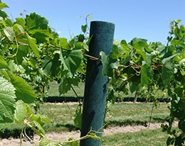 FiberForce Vineyard Post