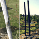 side by side comparison of wood and plastic lumber vineyard posts