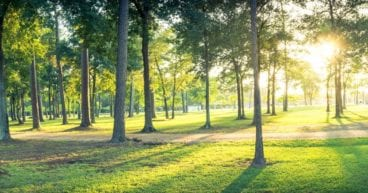 Creating Sustainable Community Parks