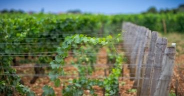 Reasons to Use Recycled Plastic Vineyard Posts