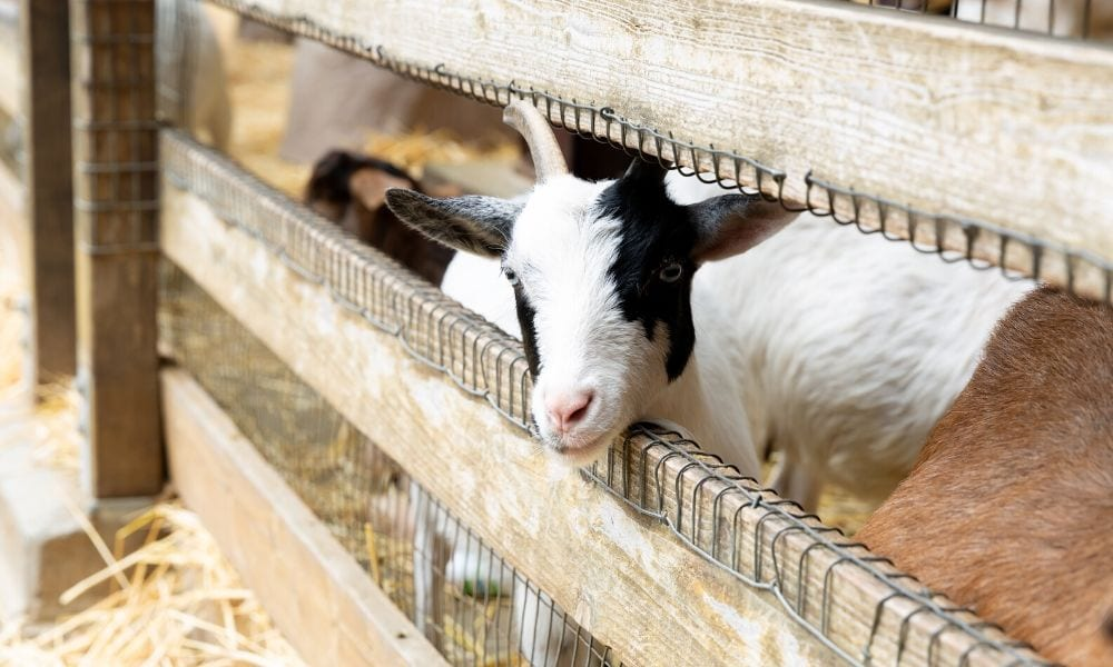 How to Choose the Right Fencing for Livestock