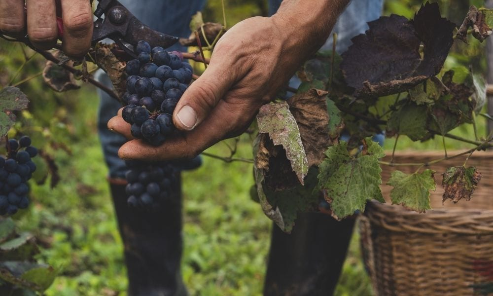 Tips for Making a Vineyard Sustainable